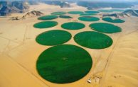 Teknologi Pertanian Makin Maju, Gurun pun Disulap Jadi Lahan Pertanian