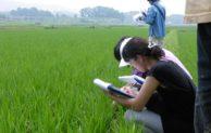 Petani dan Warisan Peradaban