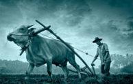 Petani, Sosok Pahlawan Yang Kian Dilupakan