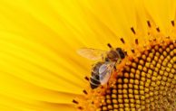 Mengenal Insektisida Golongan Neonicotinoid