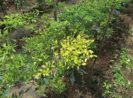 13 Bahan Aktif Pestisida yang Teruji Efektif Mengatasi Kutu Kebul