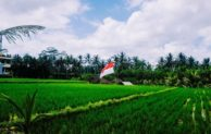 Why Agriculture Can't Be Separated from Indonesian People