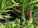 [Terbukti] 7 Strategi dan Cara Pengendalian Hama Tikus