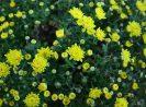4 Jenis Tanaman Hortikultura