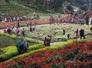 7 Jenis Usaha Hortikultura yang Diperbolehkan di Indonesia